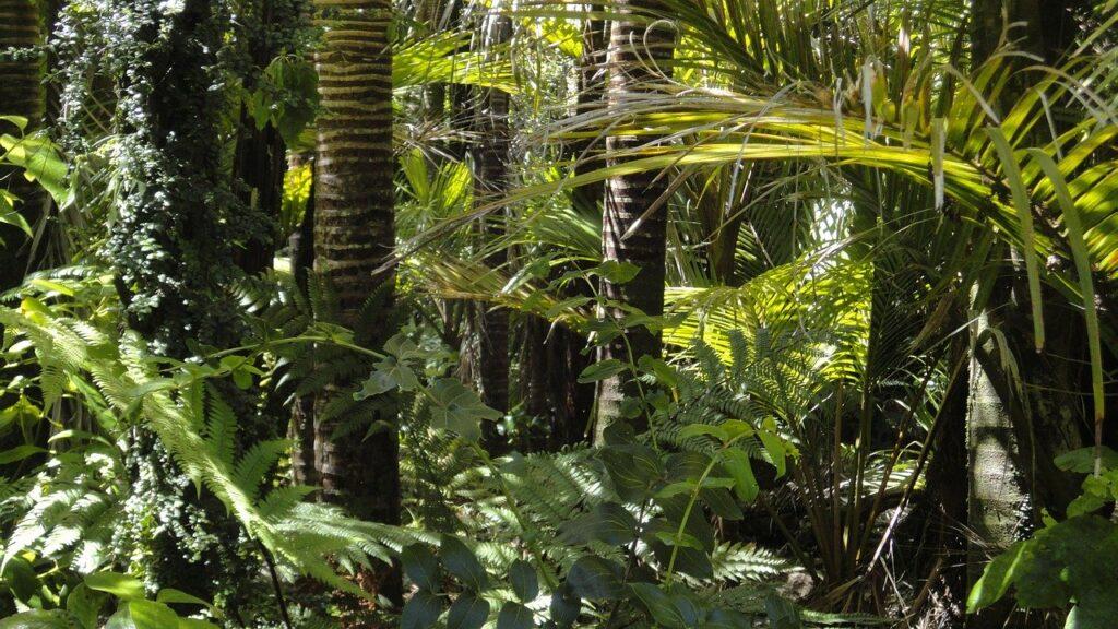 Im Schatten von Corona: Katastrophe im Amazonas