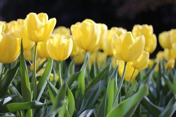 Kultusministerin Eisenmann wünscht frohe und gesunde Osterferien