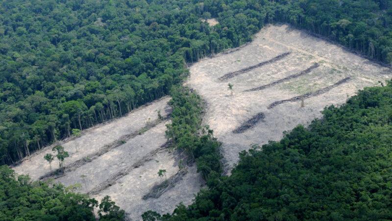 Brasiliens Umweltminister  will Corona-Pandemie für Lockerung des Waldschutzes ausnutzen