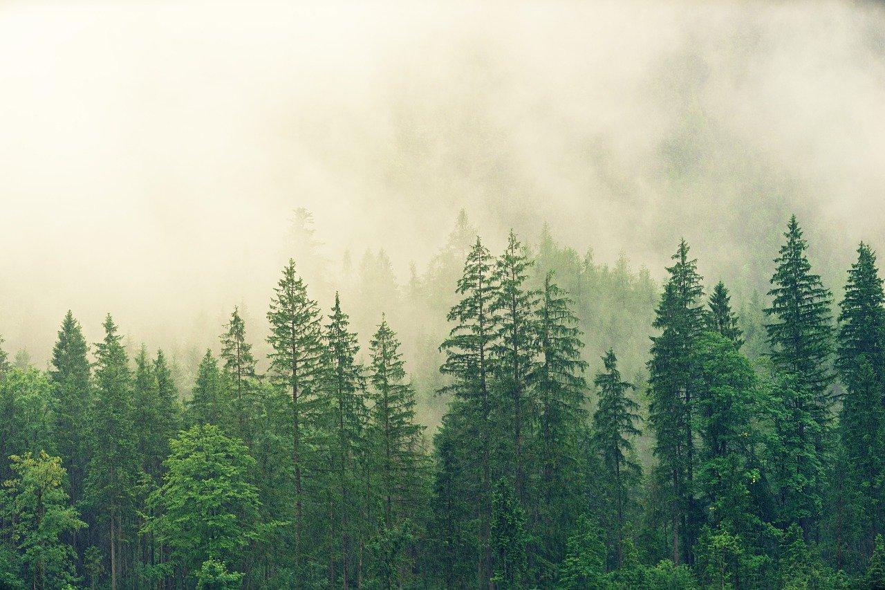 Klimawandel trifft Wälder mit besonderer Wucht