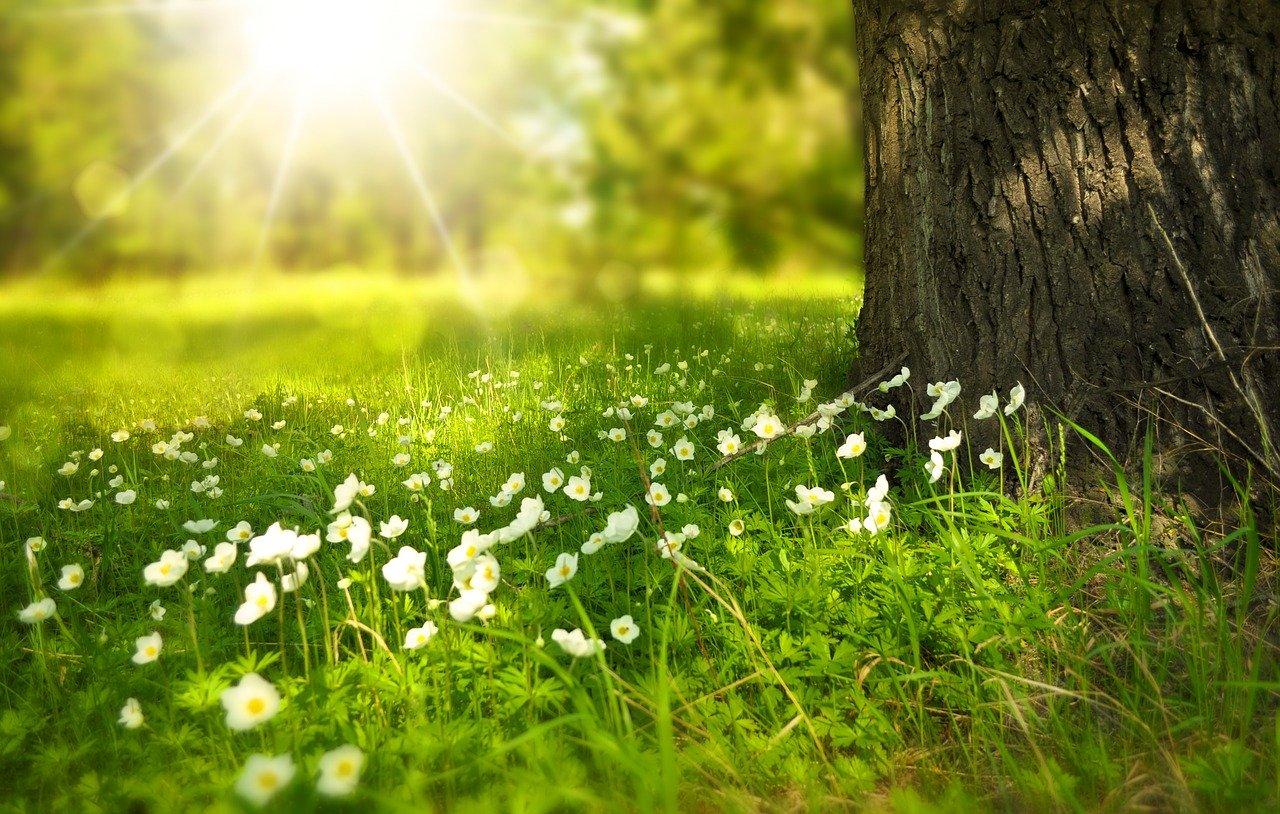 Internationaler Tag der biologischen Vielfalt am 22. Mai