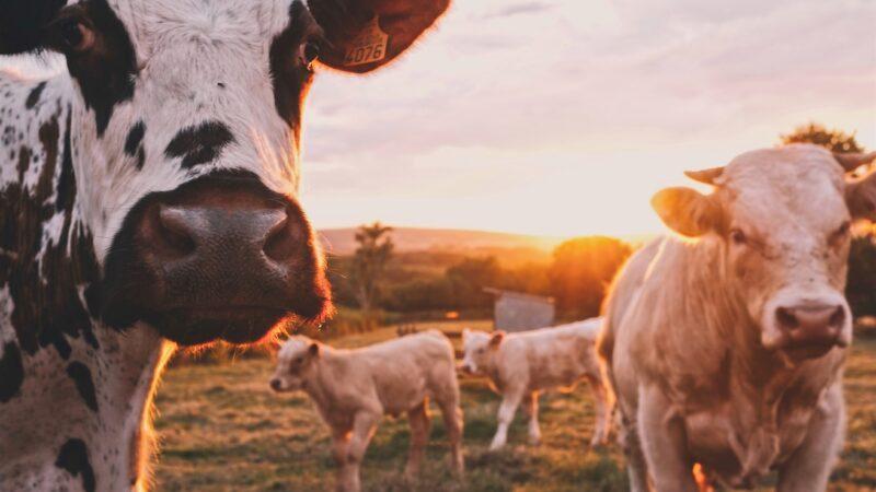 Urlaub auf dem Bauernhof ab 18. Mai wieder möglich