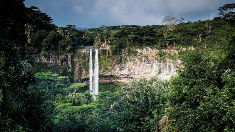 Corona-Effekt im Tropenwald